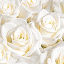 White Roses Linen Feel Dinner Napkins